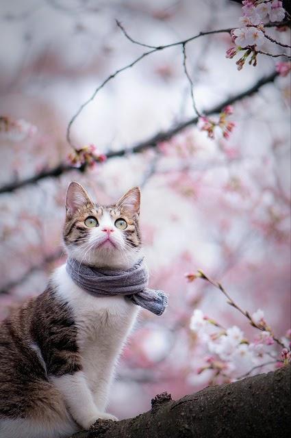 Hanami cats 1