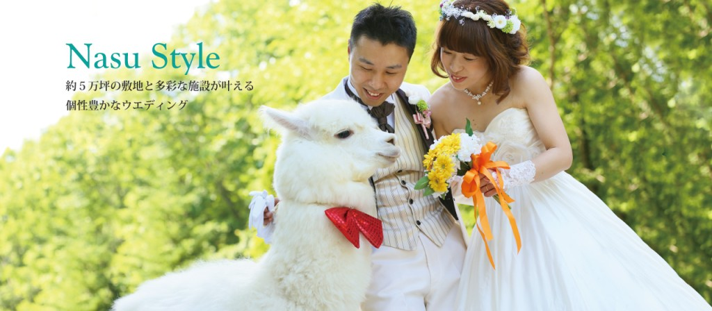 alpaca japanese wedding 2